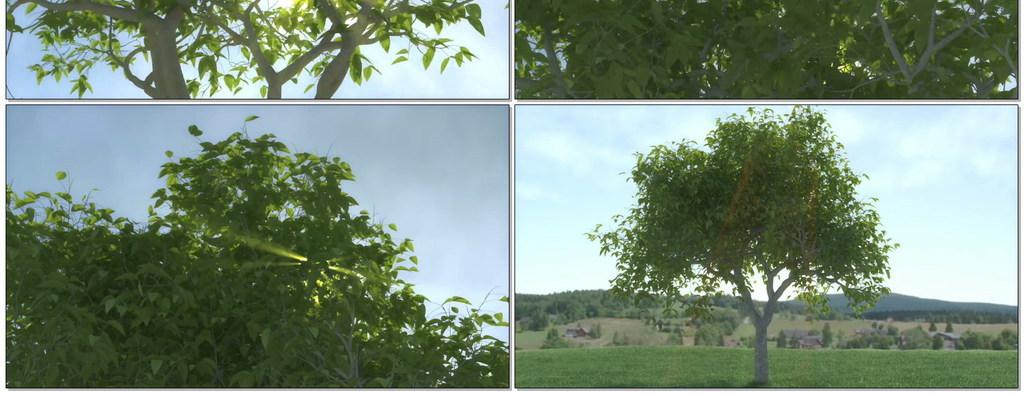 小树长成大树过程