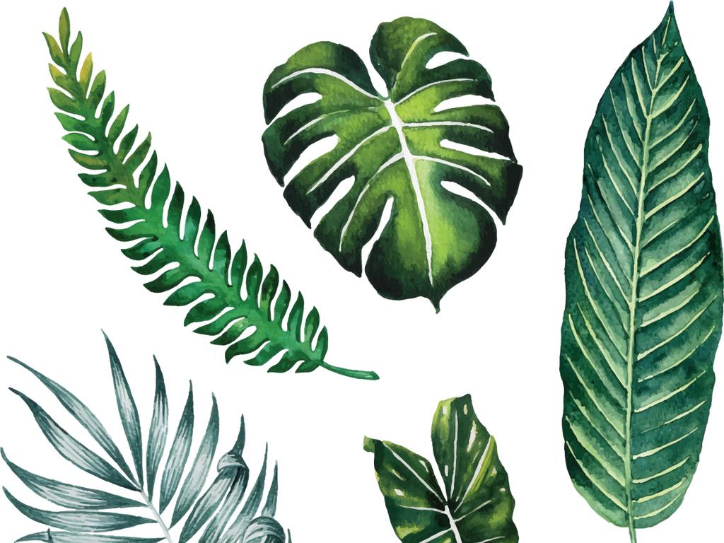 矢量手绘大叶子芭蕉叶树叶植物自然素材