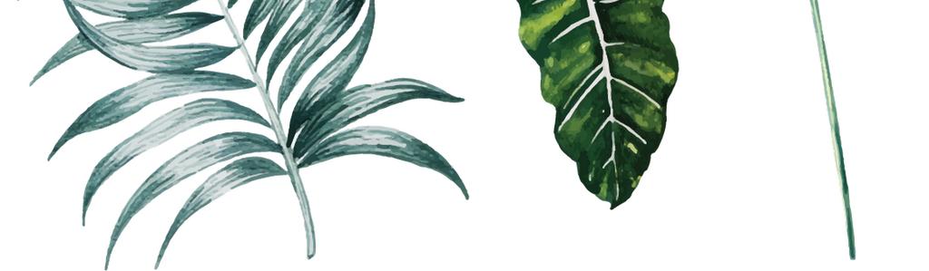 矢量手绘大叶子芭蕉叶树叶植物自然素材图片_ai模板(3