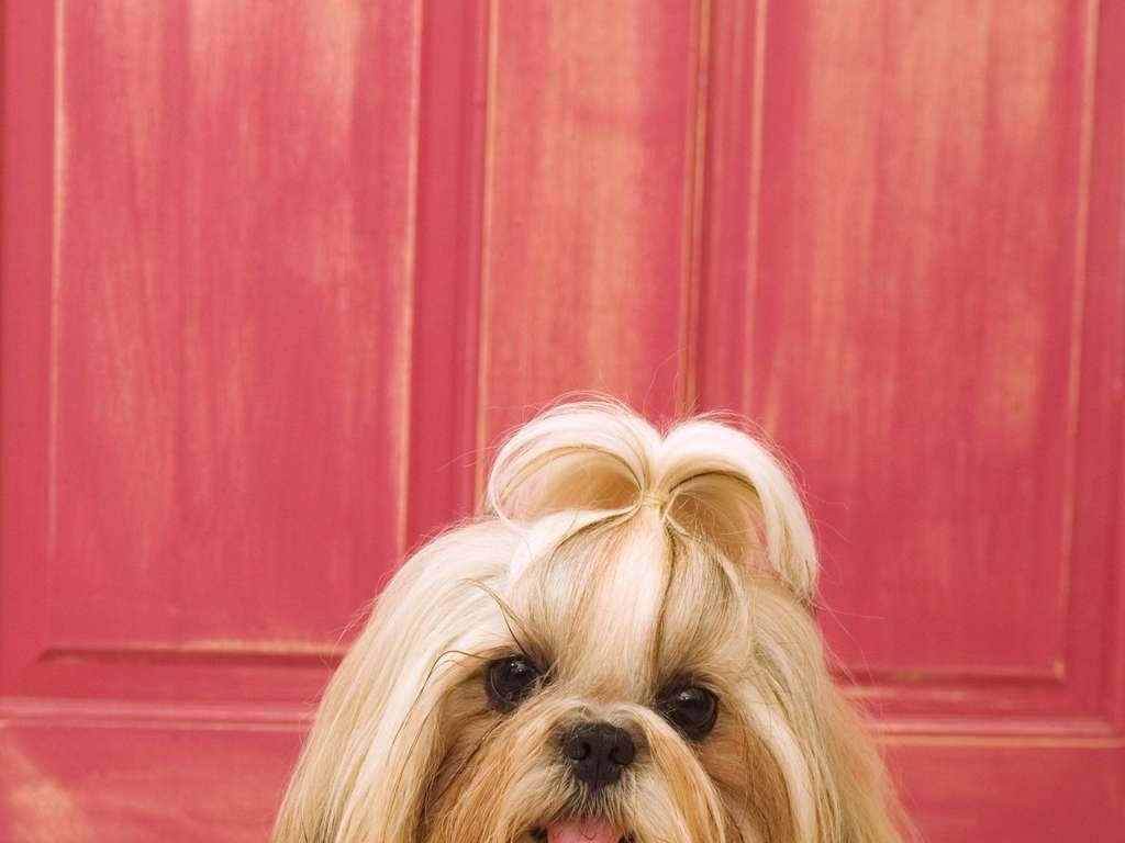 可爱小狗犬类动物狗狗写真图片素材