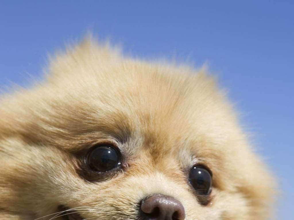 小狗摄影宠物动物可爱狗狗写真家狗