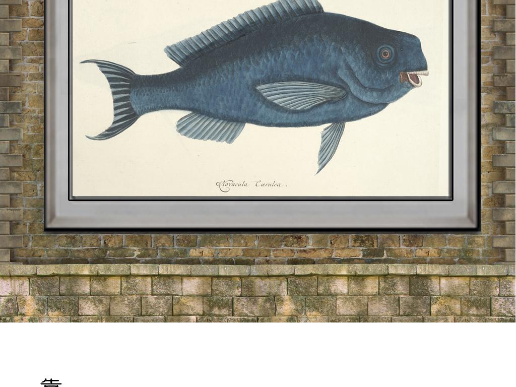海底鱼 黑白手绘