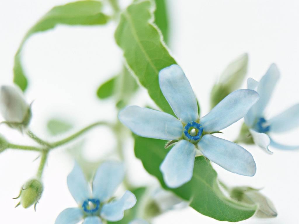 鲜花特写图片素材花朵图片植物鲜花
