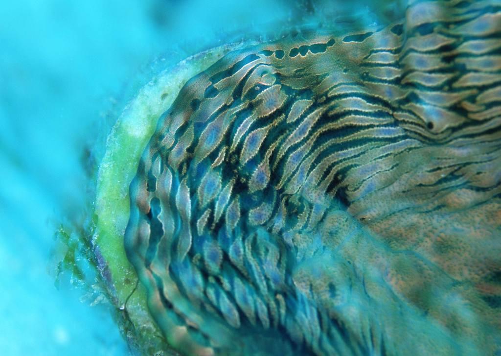 海底世界深海动物世界海底风景素材