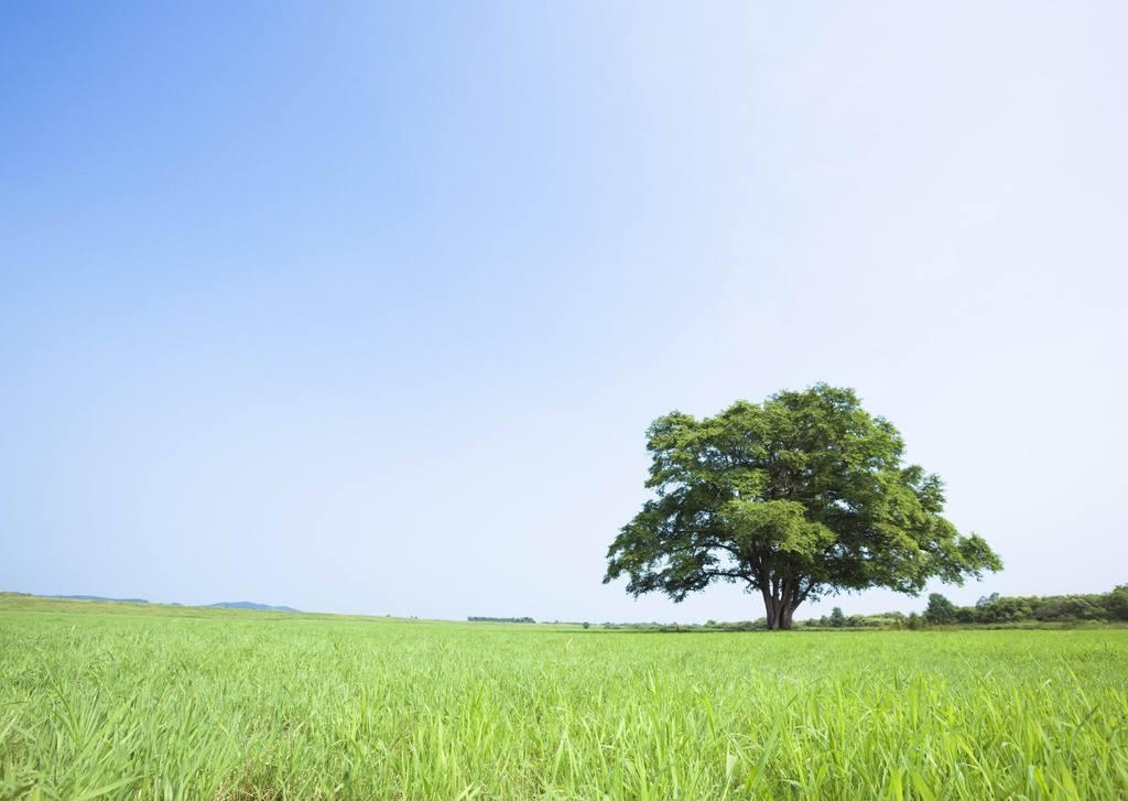 森林牧场远景草地草地树木树木草地大草原内蒙古草原草地草原草原风景