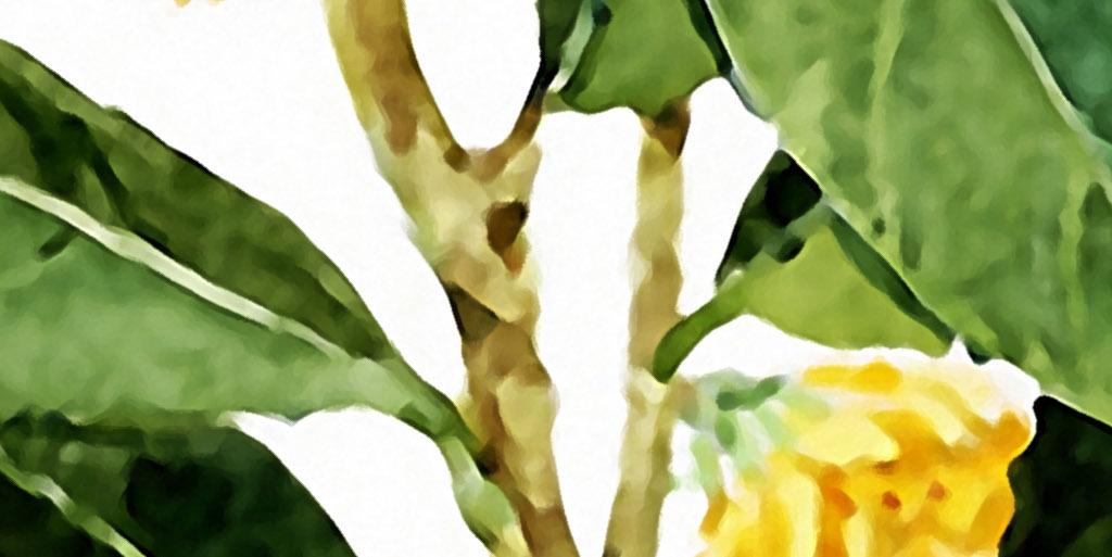 桂花王者飘香欧式北欧手绘花卉家居装饰画