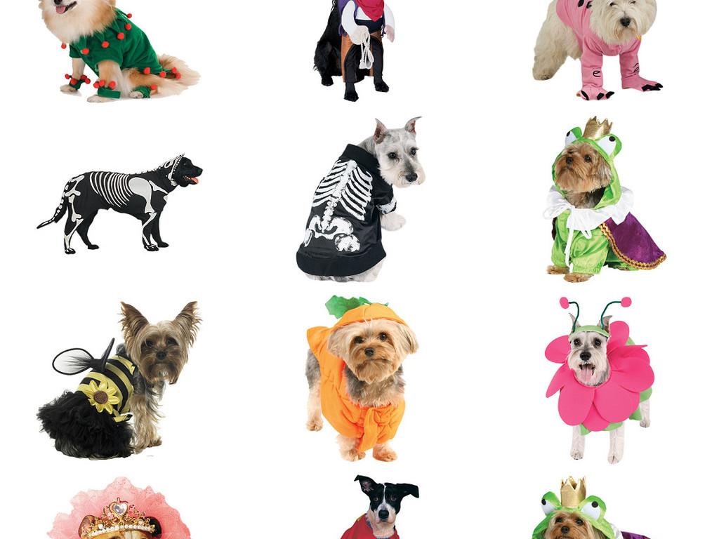 多款穿衣宠物小狗免抠png透明图片素材