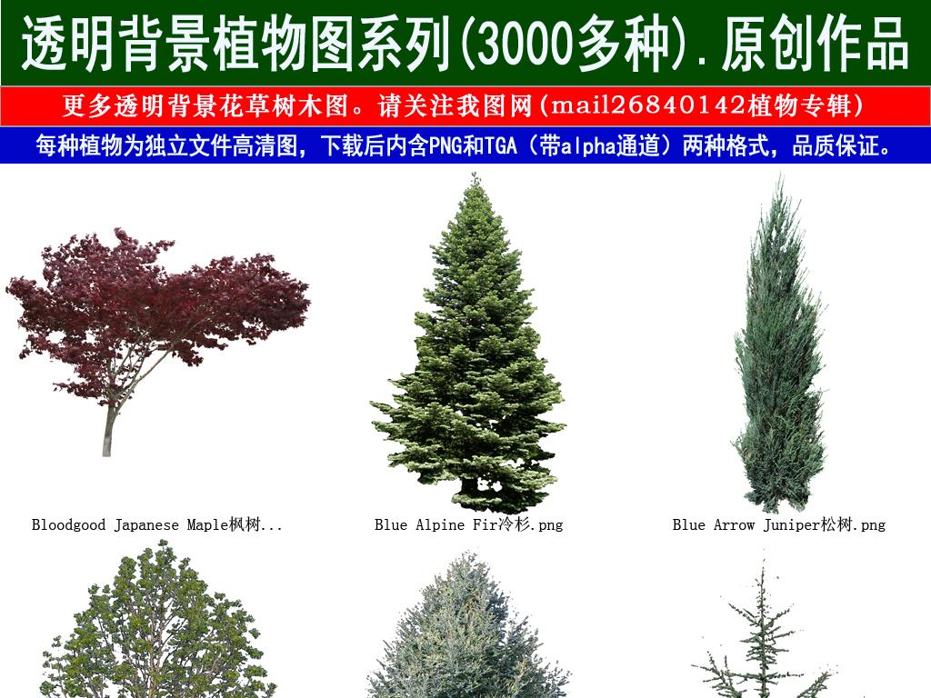 我图网提供精品流行云杉枫树树木设计元素系列图92素材下载,作品模板源文件可以编辑替换,设计作品简介: 云杉枫树树木设计元素系列图92 位图, RGB格式高清大图,使用软件为 Photoshop CS5(.png)