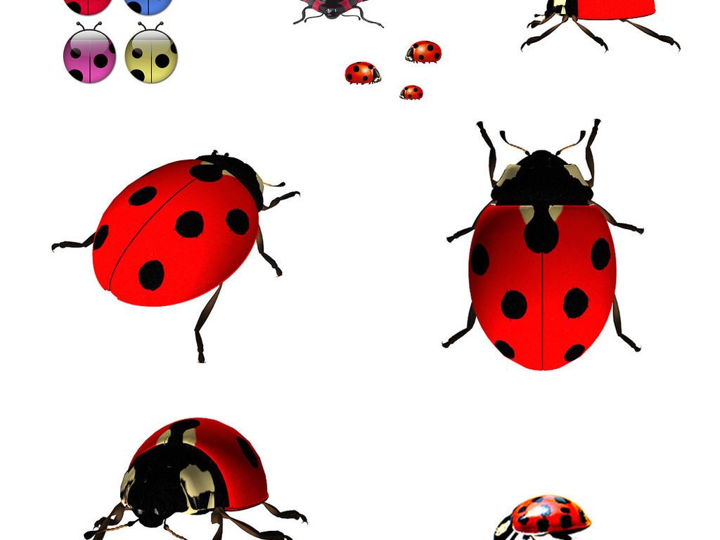 几款瓢虫免抠png透明图片素材