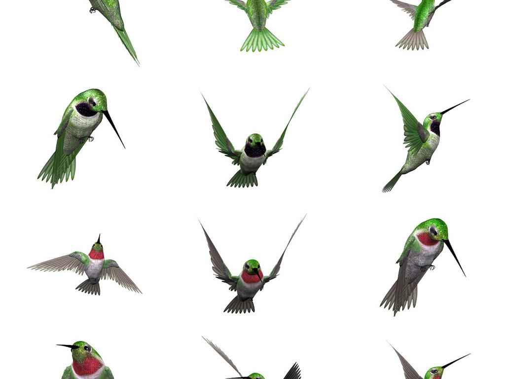 绿毛翡翠鸟免抠png透明图片素材