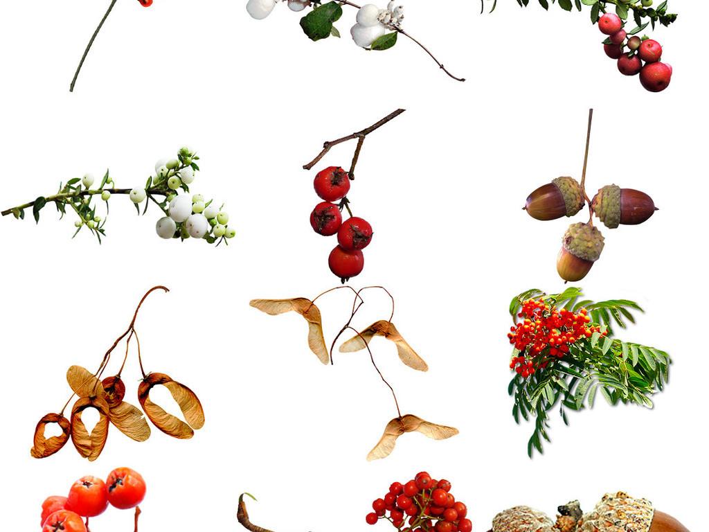 丰收的图片秋天果园图片秋天手绘图片秋天的农作物图片秋天落叶图片