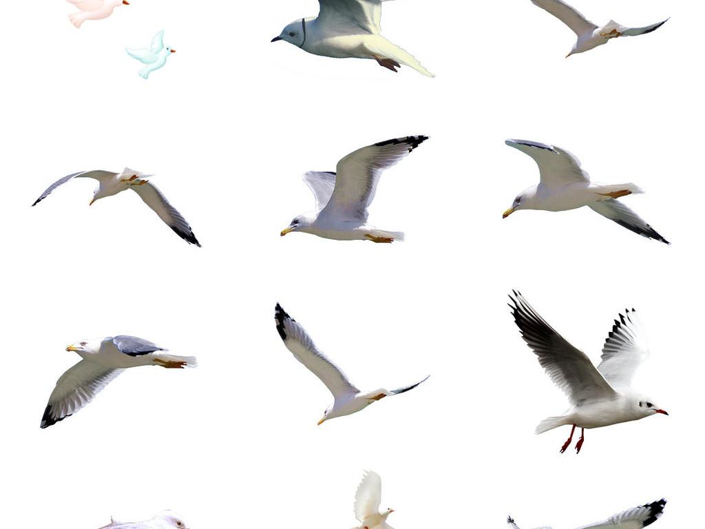 海鸥鸽子免抠png透明素材图片