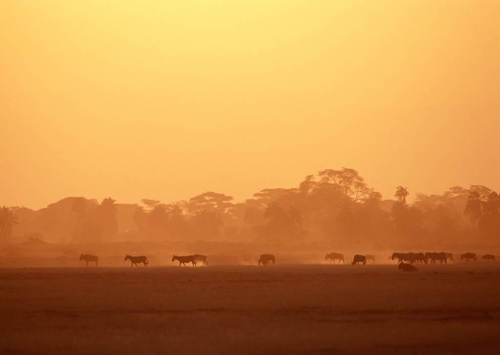 野生动物野外斑马非洲草原动物公园 位图, cmyk格式高清大图,使用