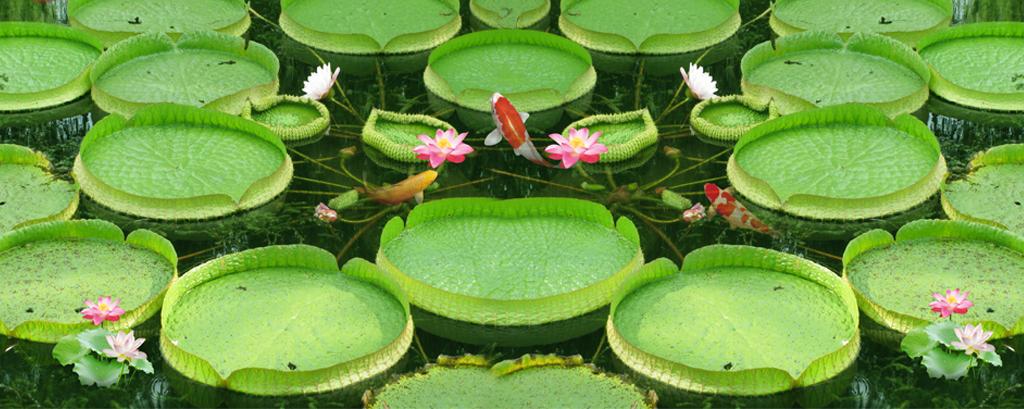 池塘鲤鱼荷花中国风3d立体画地板