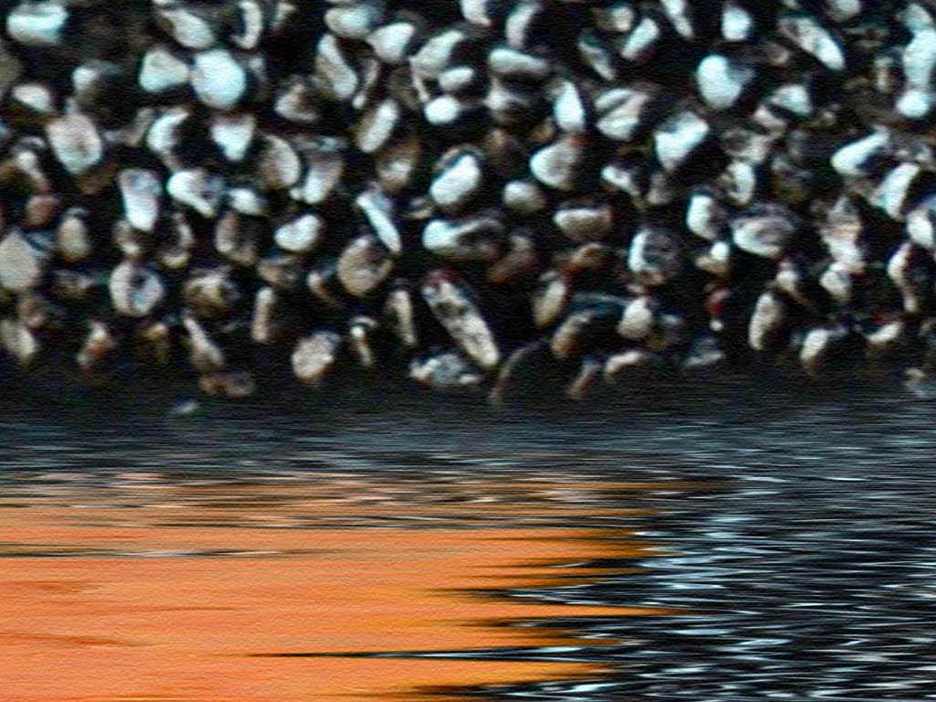 壁纸 动物 鸟 鸟类 1024