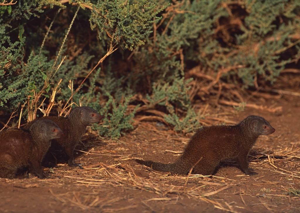 野生动物野外风景非洲草原动物公园