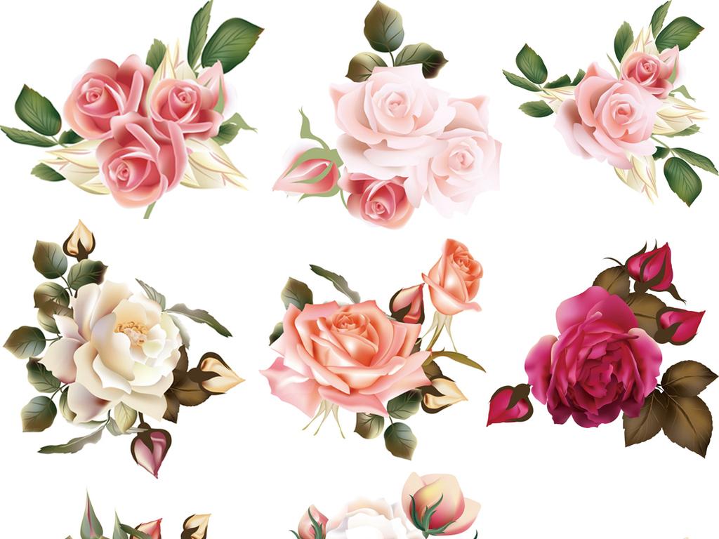 手绘玫瑰花ai格式矢量素材(图片编号:16028669)_花卉