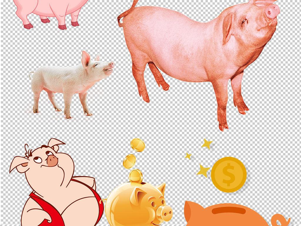 卡通猪动物图片海报素材