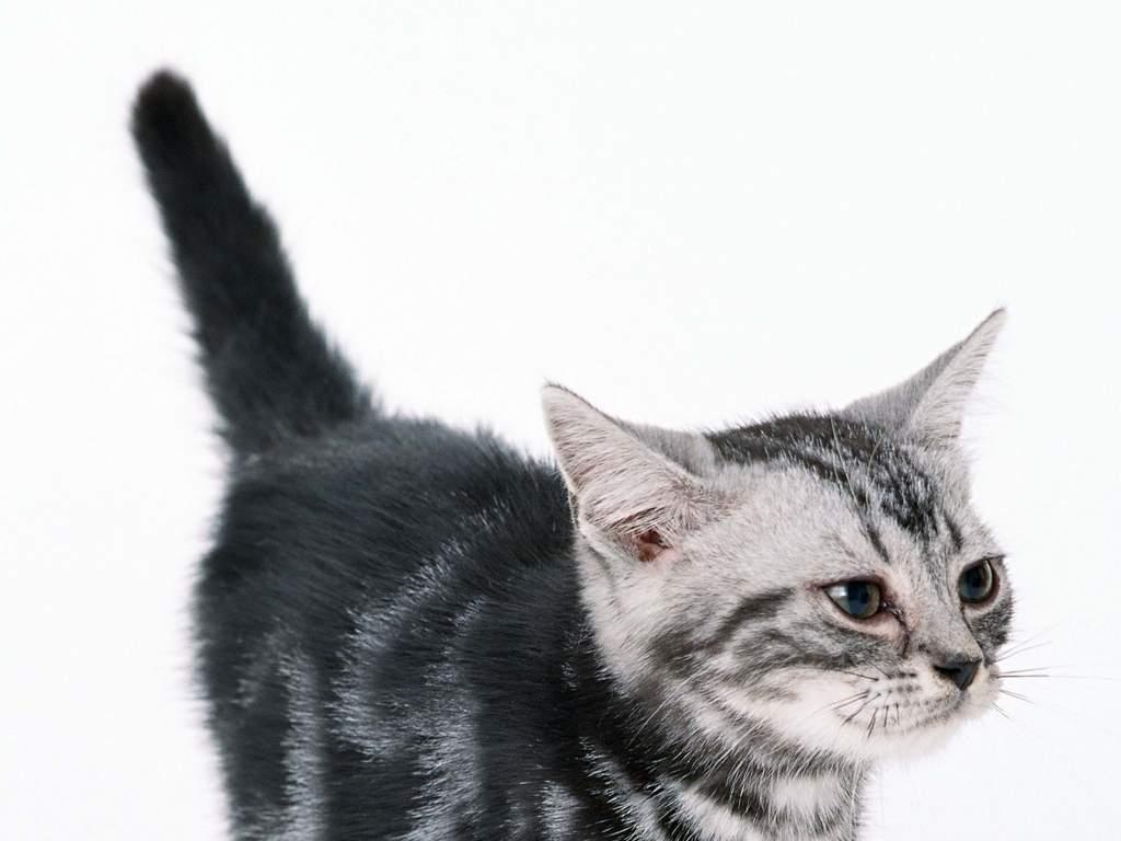 可爱小猫宠物家居动物世界猫猫动态
