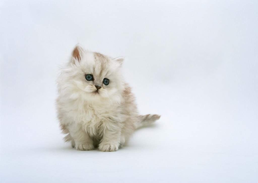 家猫小猫可爱猫狗动物宠物爱心世界