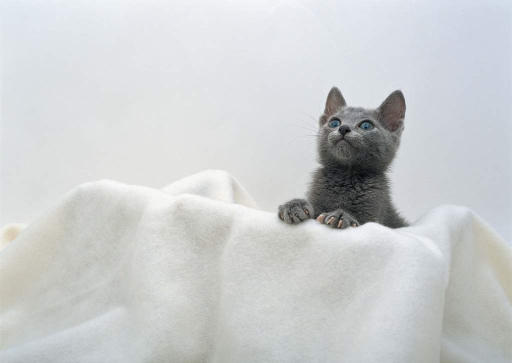 """【本作品下载内容为:""""可爱动物家猫小猫宠物世界家居宠物""""模板,其他"""
