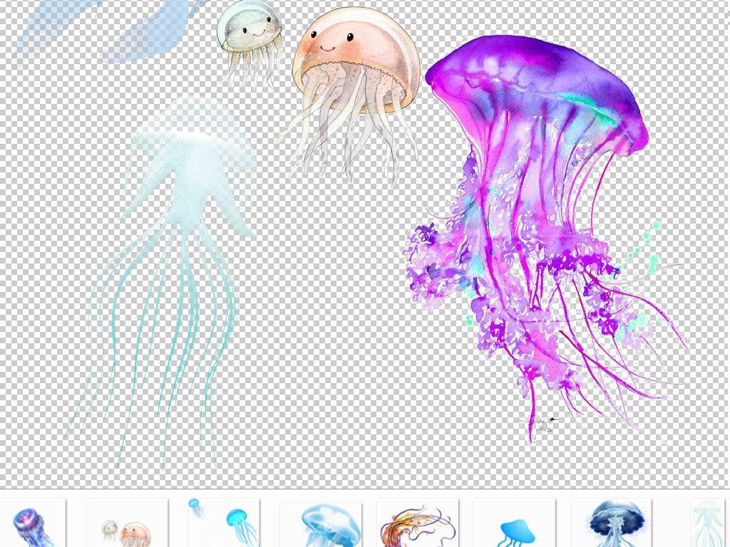 水母素材水母动物真实动物海底世界动物