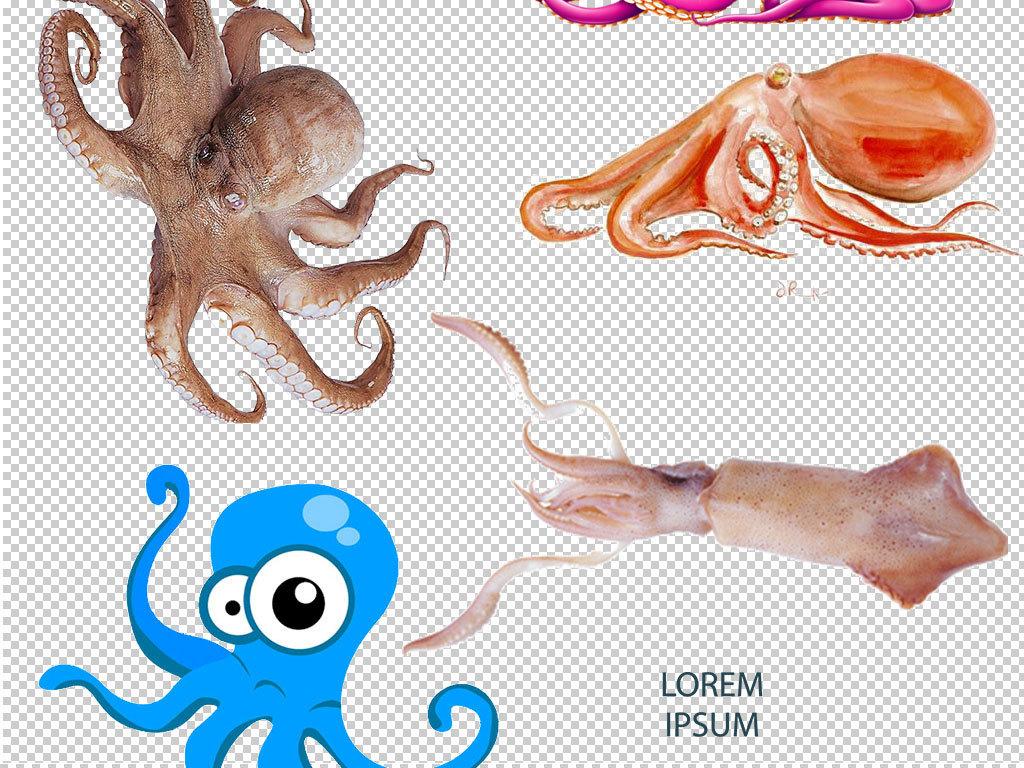 章鱼图片章鱼头像手绘章鱼章鱼素材章鱼动物