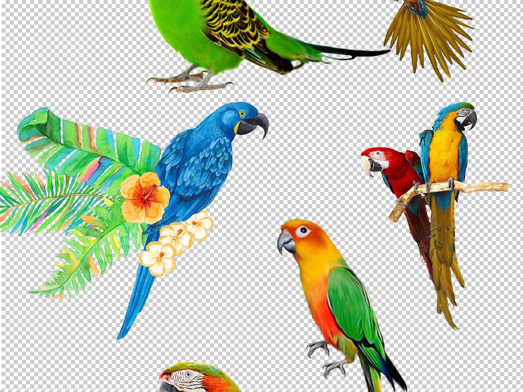 鹦鹉装饰画鸟类手绘鹦鹉鹦鹉动物真实
