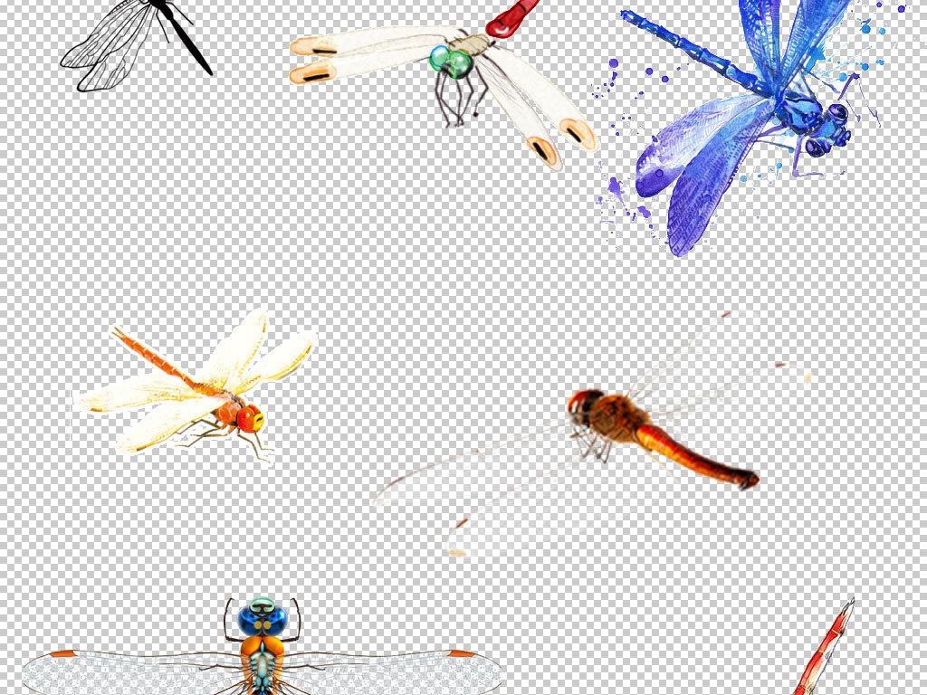 卡通蜻蜓动物图片海报素材