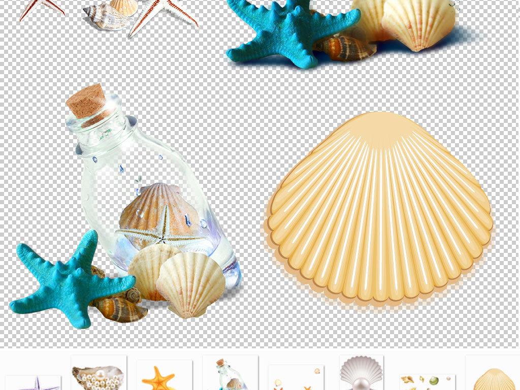 螺丝一群贝壳手绘贝壳贝壳动物
