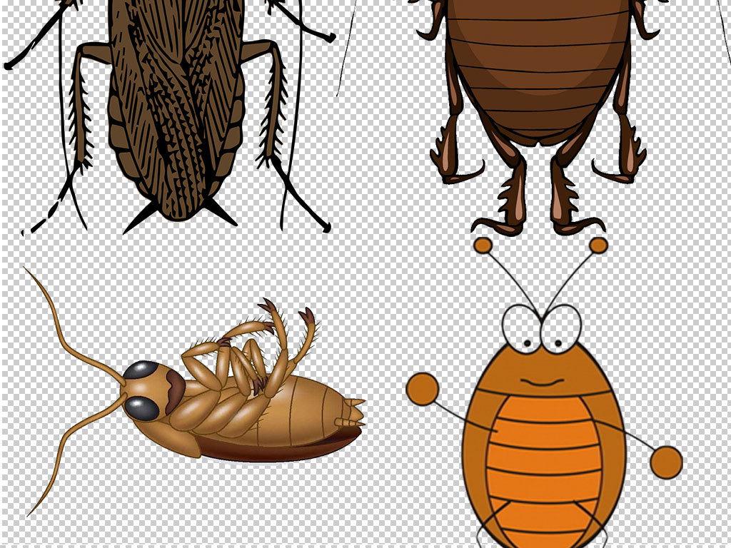 卡通蟑螂动物图片海报素材图片