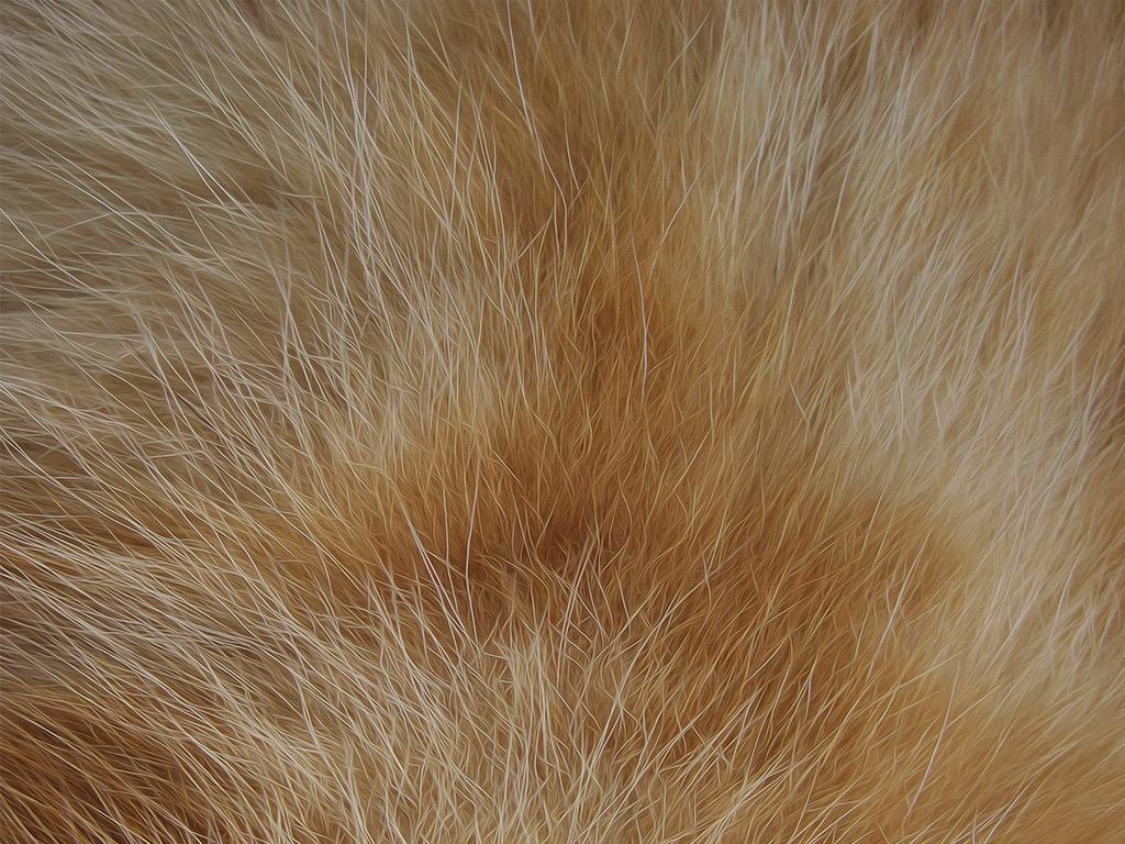 手绘北欧简约动物高清高清装饰画唯美背景高清背景唯
