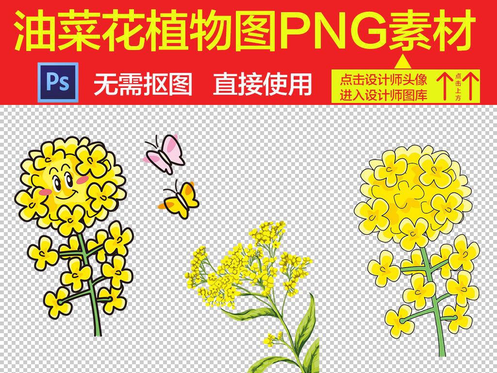 卡通花朵手绘油菜花
