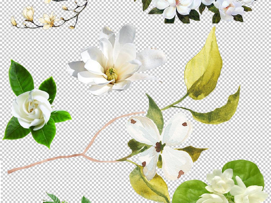 卡通花朵手绘栀子