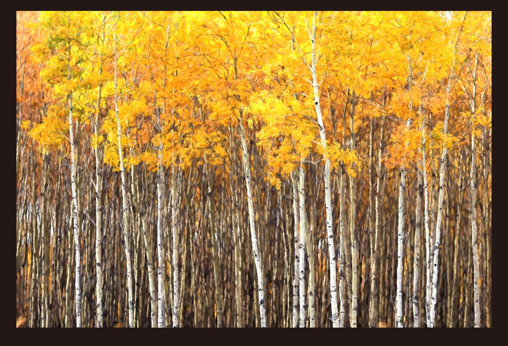 手绘桦树林电视背景墙