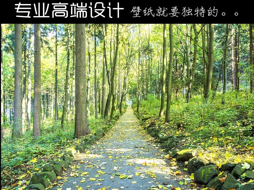 唯美森林小路风景3d背景墙壁画