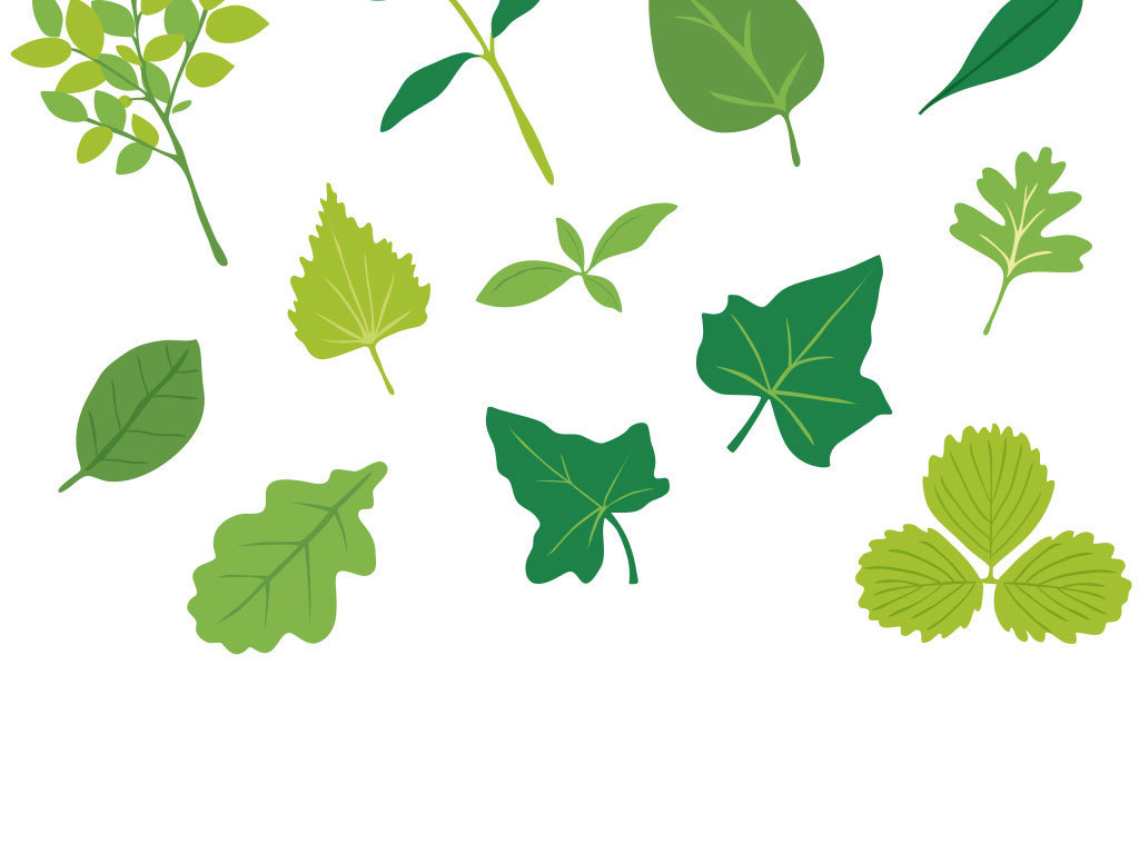 卡通叶子                                  手绘树叶