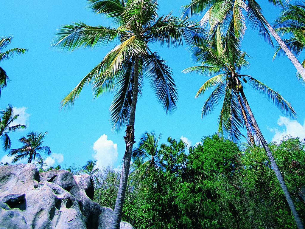 热带树木海边植物海岛风景旅游风光
