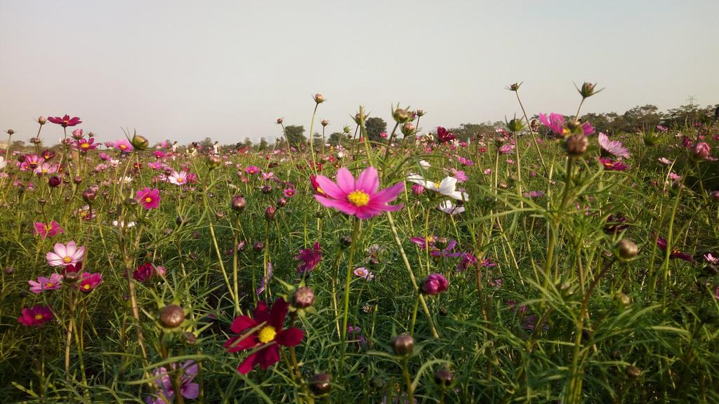 花朵背景花草田园风光