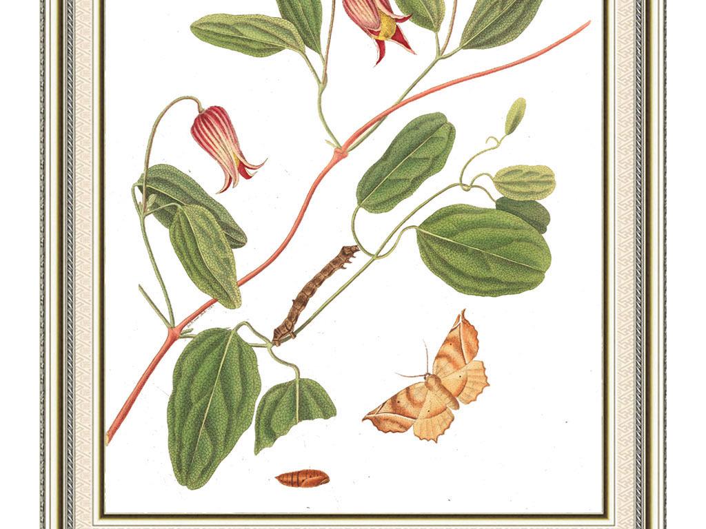 蝴蝶植物卡通动物小动物野生动物动物剪影卡通小动物