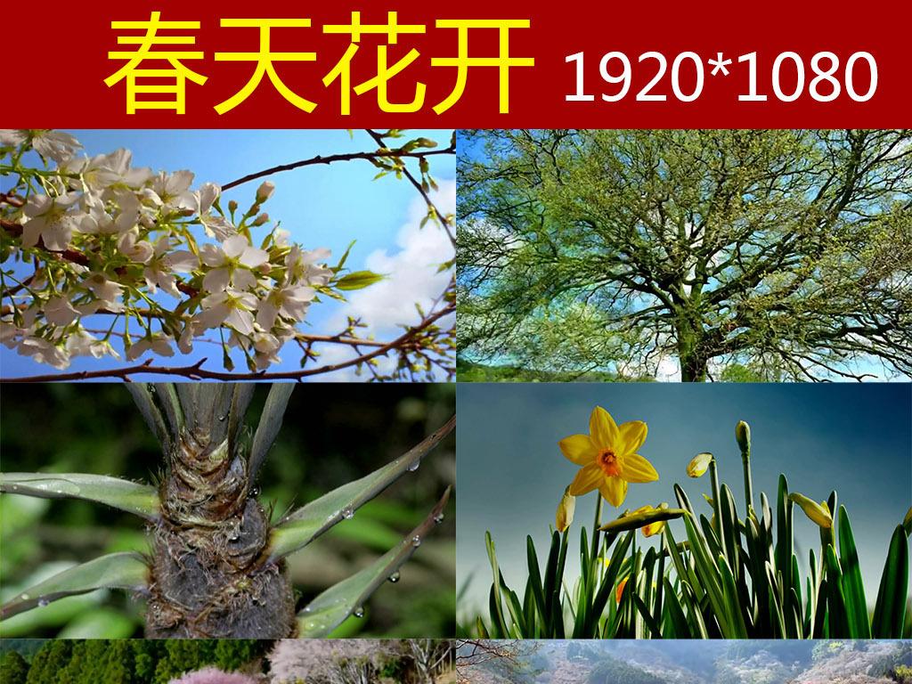 春天万物生长高清实拍视频素材