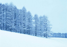 雪域风景冬季树木雪地丛林冬日景观