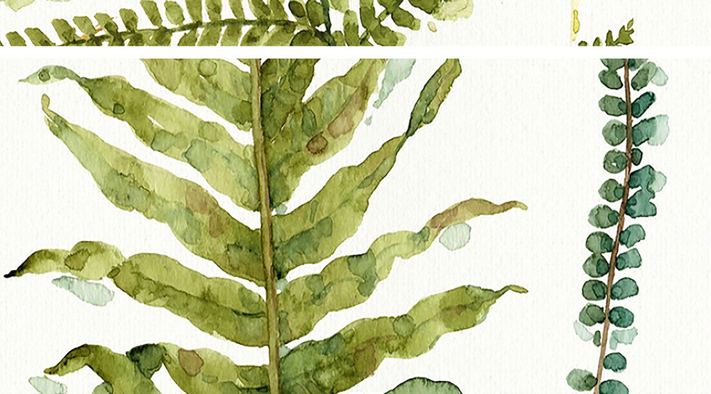 英文底色蕨类植物树叶装饰画图片