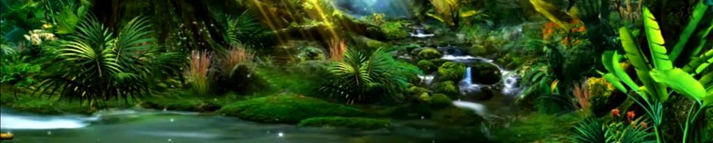 原始灌木丛林热带雨林高清视频