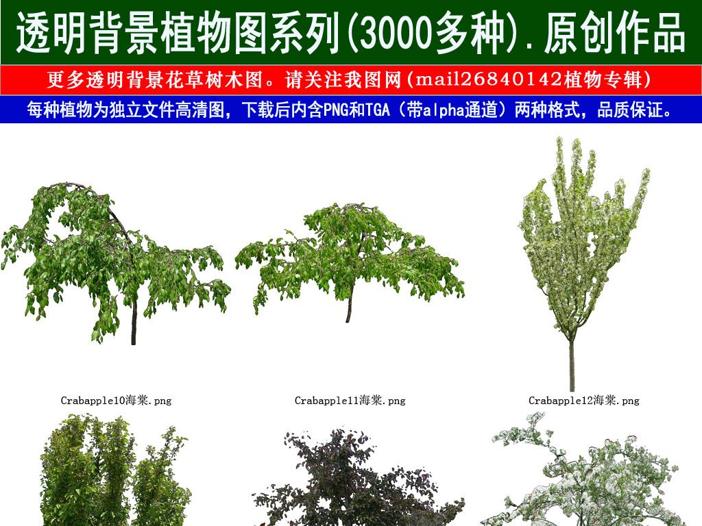 我图网提供精品流行红果花草树木透明背景设计元素系列图99素材下载,作品模板源文件可以编辑替换,设计作品简介: 红果花草树木透明背景设计元素系列图99 位图, RGB格式高清大图,使用软件为 Photoshop CS5(.png)