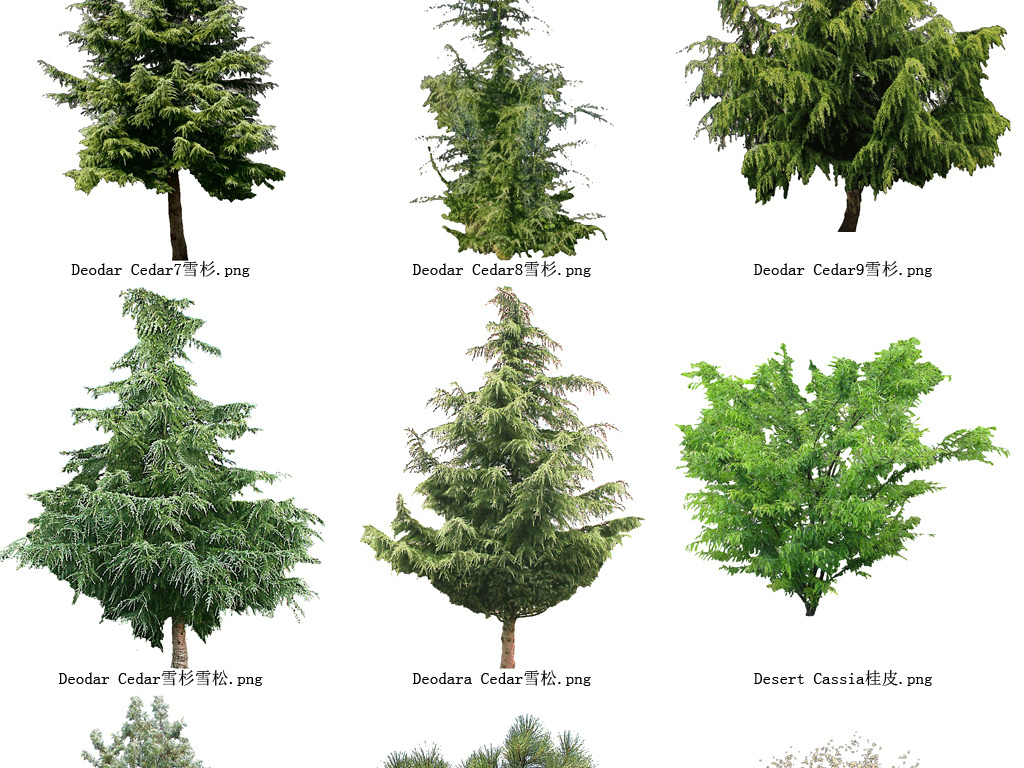 雪松花草树木透明背景设计元素系列图102