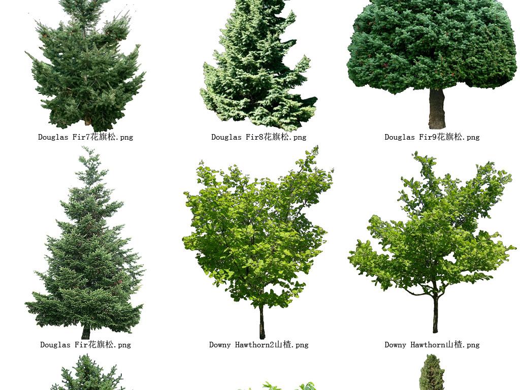 松树花草树木透明背景设计元素系列图103图片素材 模板下载 39.72MB