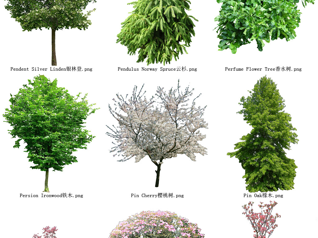 樱桃树花草树木透明背景设计元素系列123