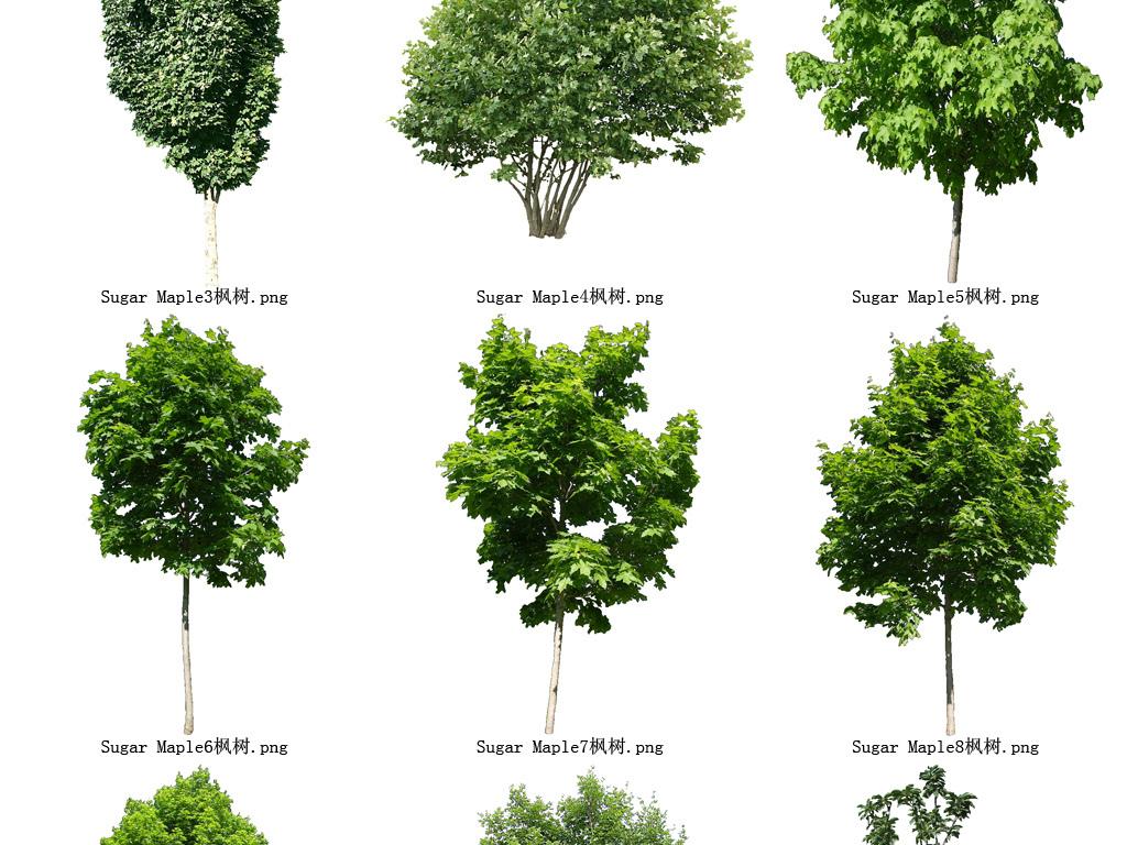 百度壁纸花草木树-枫树花草树木透明背景设计元素系列128