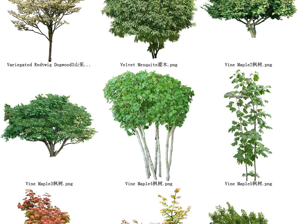 雪松树花草树木透明背景设计元素系列132图片素材 模板下载 37.87MB